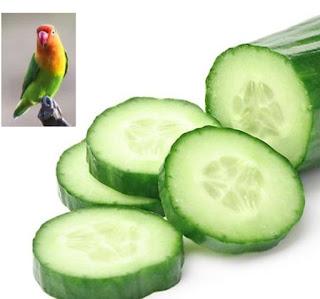 Itulah sebabnya kenapa buah mentimun yang biasa kita gunakan sebagai lalapan dipercaya ma Manfaat Mentimun Untuk Lovebird: Menurunkan Birahi Lovebird