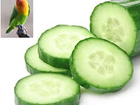 Manfaat Mentimun Untuk Lovebird: Menurunkan Birahi Lovebird