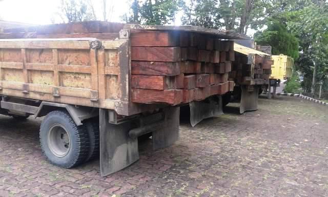 Illegal Logging kembali terjadi di Papua, Polhut Amankan  400 Batang Kayu Merbau