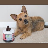 Only Natural Pet antioxidant supplement for dogs review