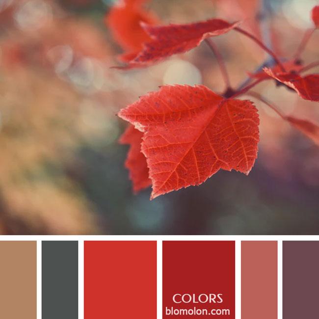 variedad_en_color_paletas_de_colores_38