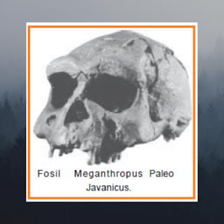 Jenis Meganthropus