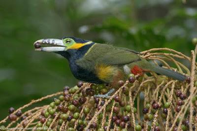 Legado das Águas abriga espécies raras e em perigo de extinção