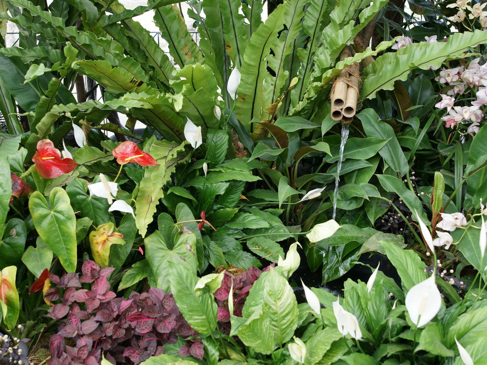 Plantas e jardins plantas flores e jardinagem plantas for Jardin tropical plantas