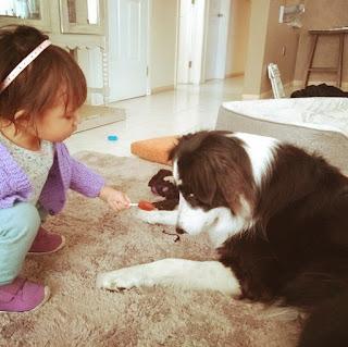 border collie, razas de perro grande para niños