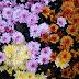 Sunday Flowers #209