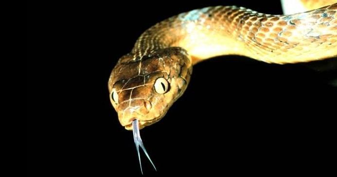 Φίδια: Δαγκώνουν πάνω από 190 άτομα τον χρόνο στην Ελλάδα – Πότε να ανησυχήσετε