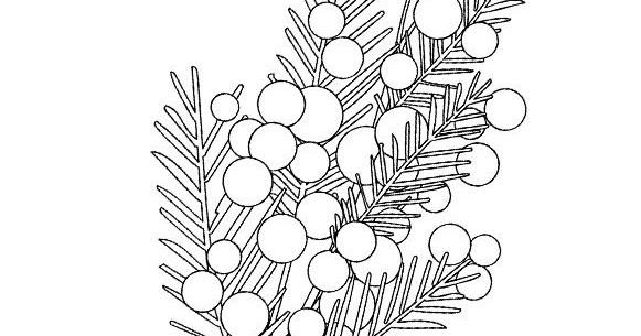 Mimosa Da Colorare.Stampa E Colora Mimosa Da Stampare E Colorare