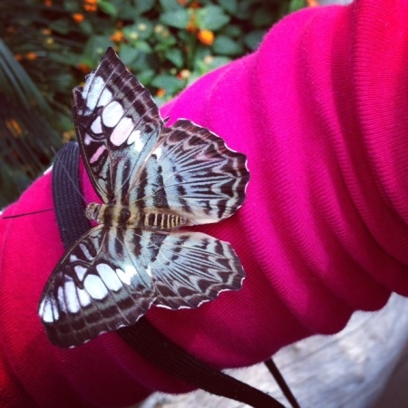 The Krohn Conservatory Butterfly Exhibit in Cincinnati
