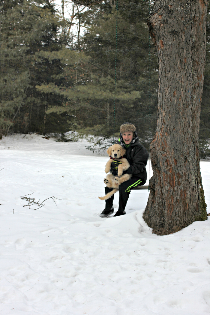 Golden retriever puppy and boy on swing - www.goldenboysandme.com
