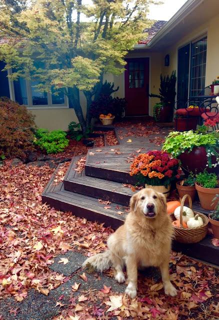Autumn, Squash, and Pumpkins (Oh my!)
