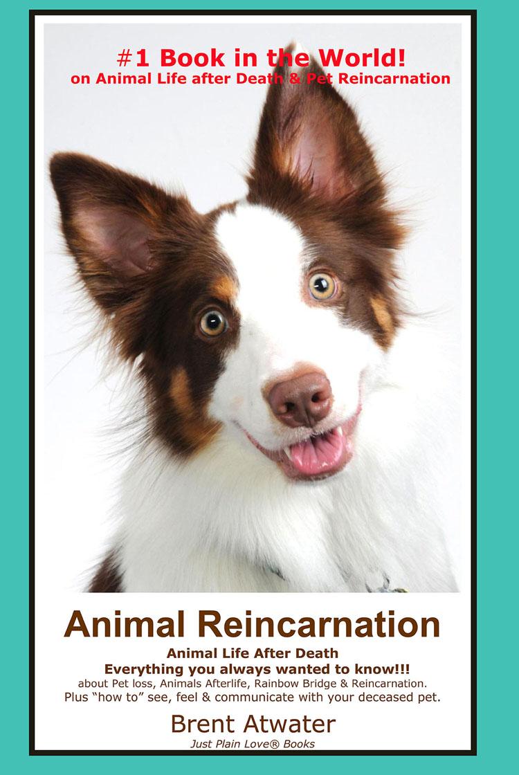 Movie Horse And Dog Reincarnated