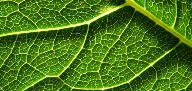 Fotosintesis, biologia y botanica