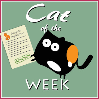 Cat of the Week--Cuddlywumps Cat Chronicles