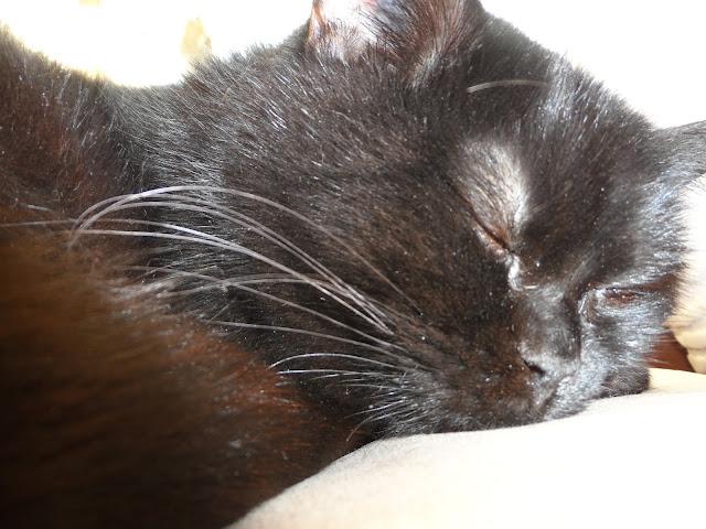 Blog Lifestyle Katze