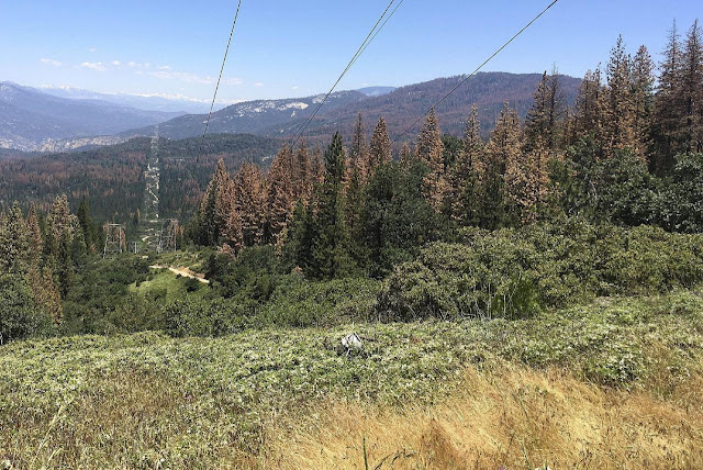 Drought kills 66 million trees in California's Sierra