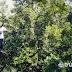 """""""Munjang Mangrove Jilid 2"""" Kesejukan Penuh Inspirasi"""