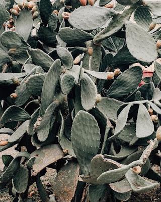 Liście roślin domowych