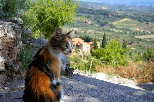 Mystras cats