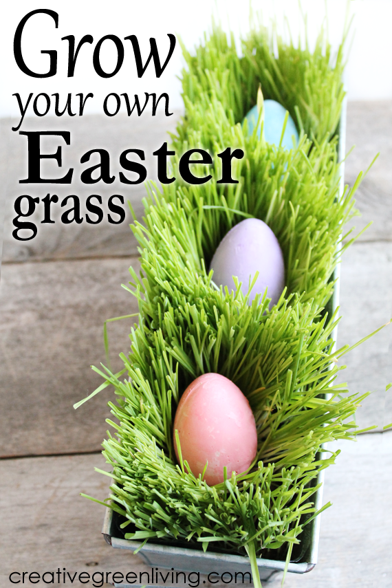 How to grow DIY edible Easter grass. It's the perfect alternative to plastic or paper shreds. Fill with pretty eggs for a fun centerpiece idea. #creativegreenliving #eastergrass #edibleeastergrass #ecofriendly #easter #easterbasket #groweastergrass