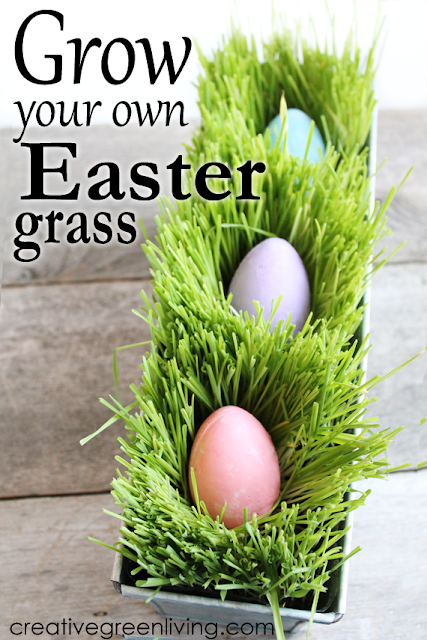 How to grow DIY edible Easter grass. It's the perfect alternative to plastic or paper shreds. Fill with pretty eggs for a fun centerpiece idea.