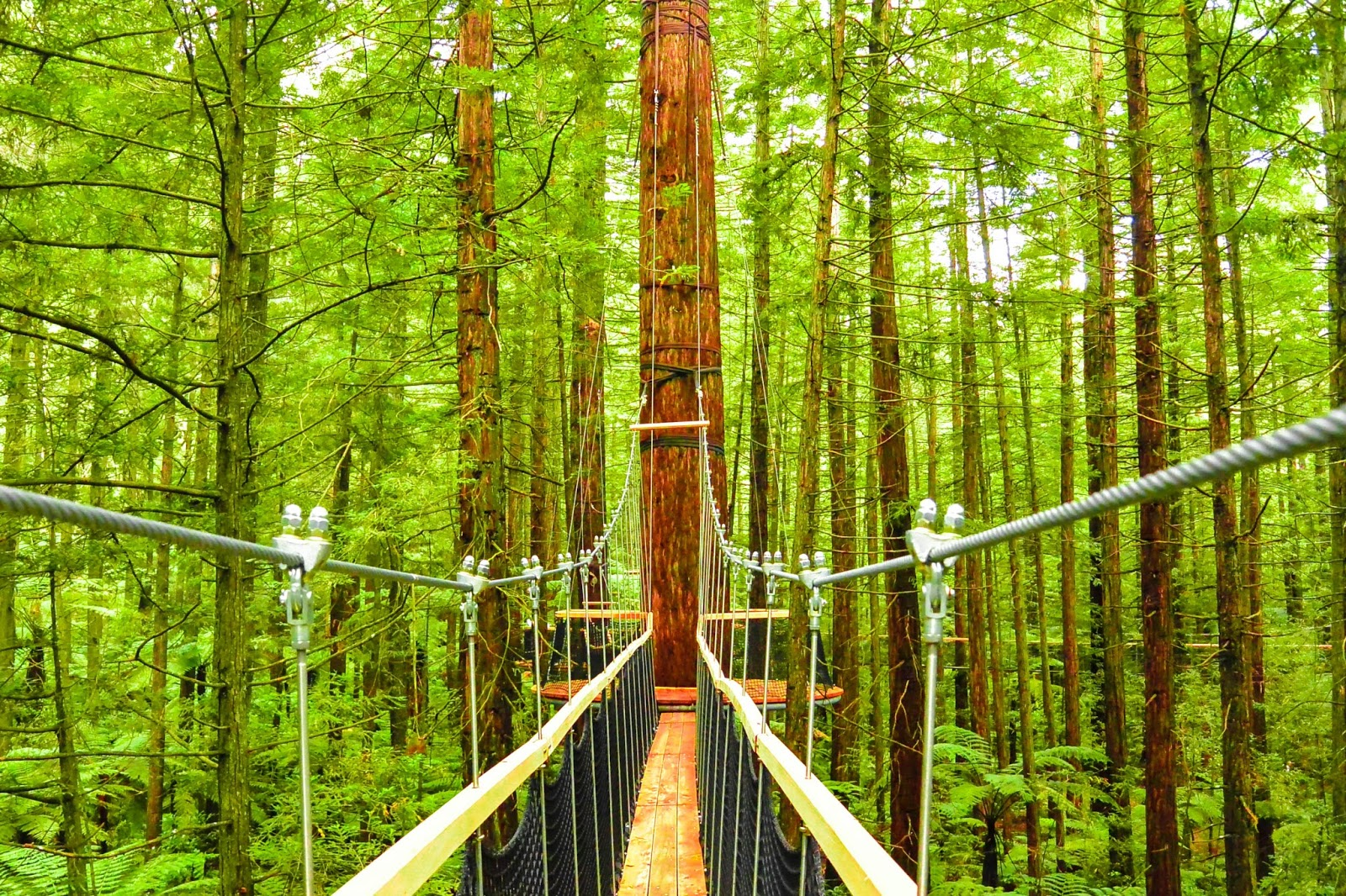 Things to do in Rotorua New Zealand : The Rotorua Redwoods TreeWalk