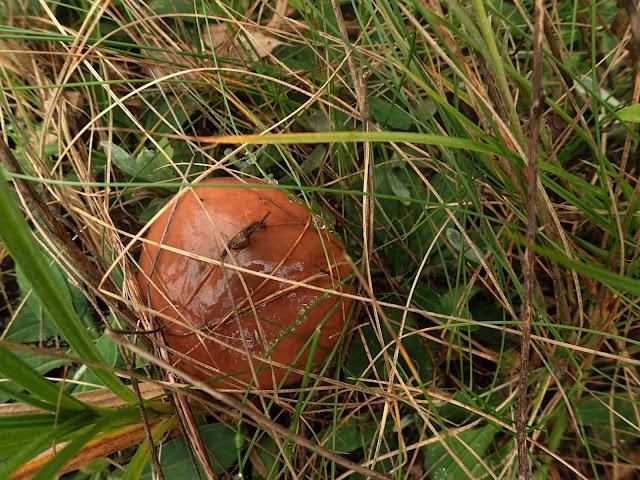 Obszar obfituje w grzyby, zwłaszcza w maślaki