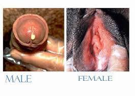 Obat Penis Yang Keluar Nanah Dan Perih Saat Kencing