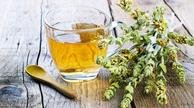 Albanian Mountain Tea at risk of extinction