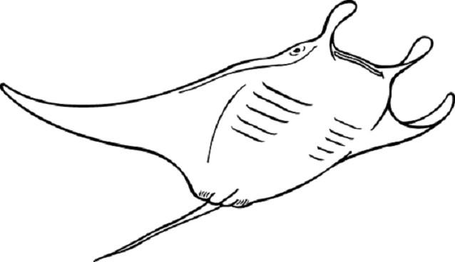 Sketsa Gambar Ikan Hiu Hitam Putih Wwwimagenesmicom