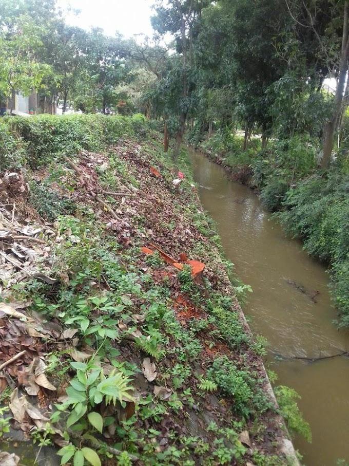 Warga Perum Melati Pertanyakan Penebangan Pohon di Bantaran Kali