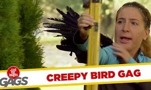 Shaken by a Raven Prank – Just For Laughs Gags