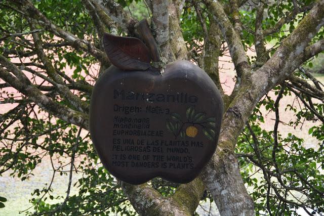 Tortoises Galapagos toxic apples