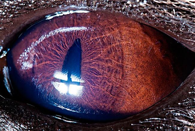 Olho de Hiena