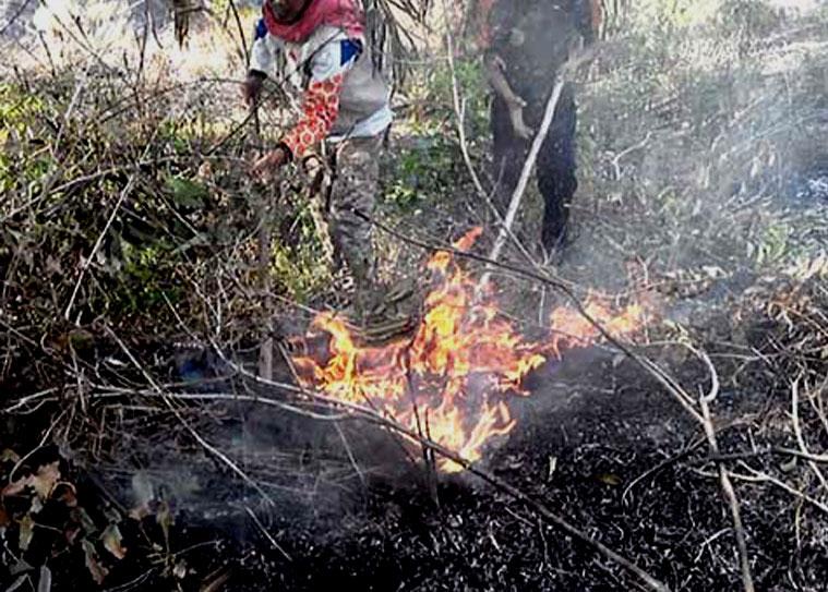 kebakaran lahan sawit milik petani