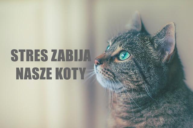 Stres u kota - przyczyny, objawy, skutki i zapobieganie