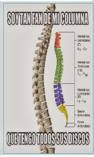 enfermedades de la columna 1