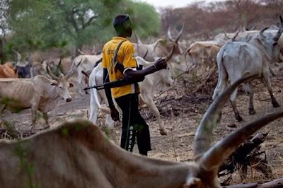 Again Herdsmen Invade Adamawa; Kill Two, Injure 29 People