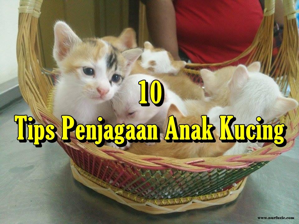 10 Tips Penjagaan Anak Kucing Nurfuzie Com