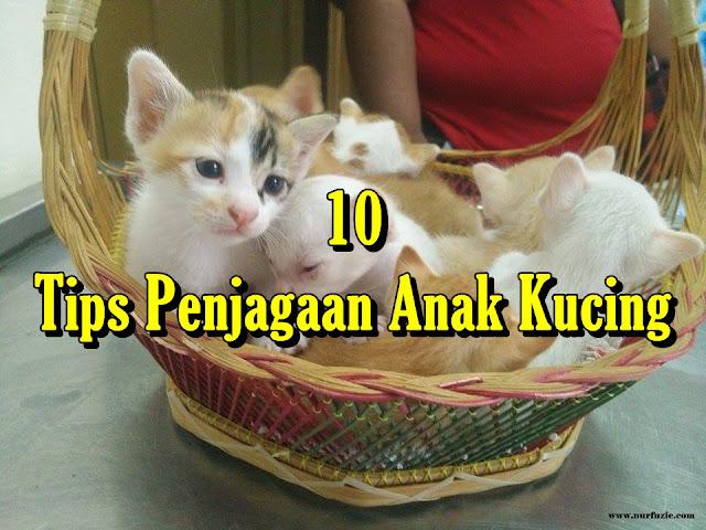 10 Tips Penjagaan Anak Kucing
