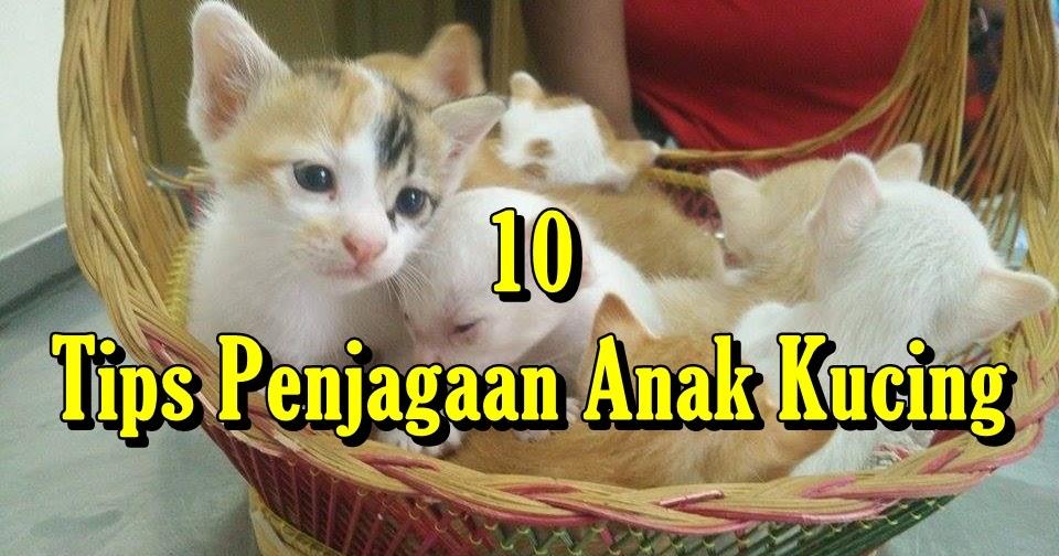 10 Tips Penjagaan Anak Kucing Eintan Nurfuzie Lifestyle Beauty Travel Tips Rawatan Kucing Review