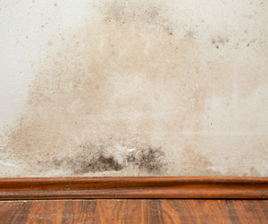 Ways to Minimize Mold at Delmarva Insulation