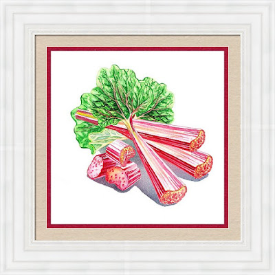rhubarb still life painting in watercolour