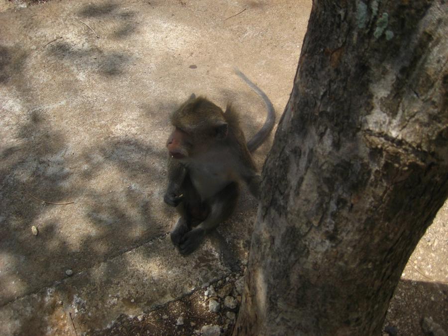 나무 밑의 원숭이