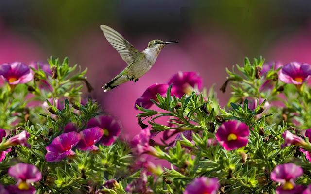طيور,Wallpapers of Birds ,خلفيات طيور,Wallpapers,خلفيات, 4K Wallpapers,  Wallpapers,Wallpapers Birds,اجمل الطيور,طيور جميلة ,صور طيور