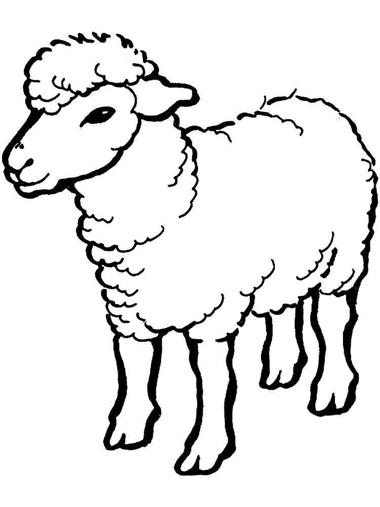 Gambar Mewarnai Domba Untuk Anak PAUD dan TK