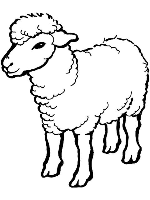 Gambar Mewarnai Domba - 8