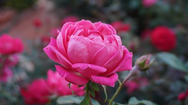 hoa tình yêu đẹp