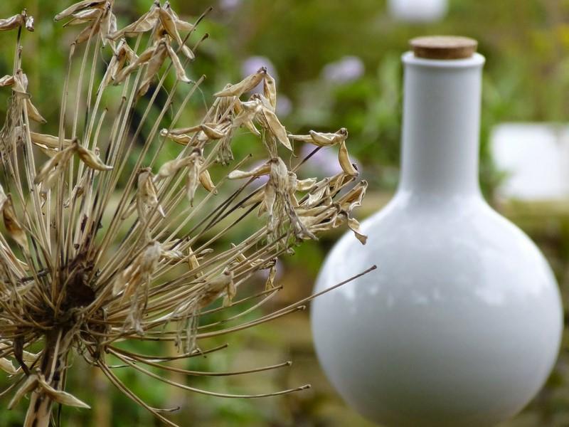 cabeza de semillas de agapanto (Agapanthus) juntno a vasija blanca de boticario