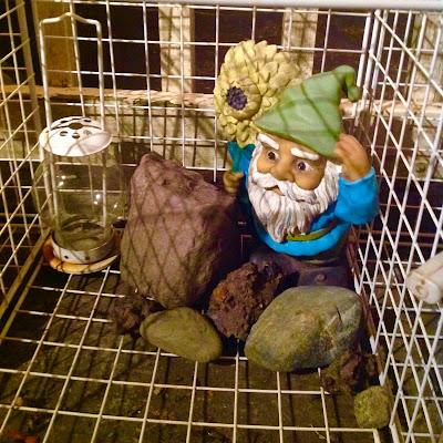 Garden Gnome Looking out over Container Garden